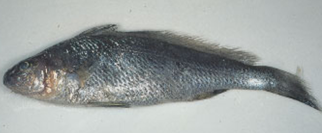 InSeason Fish